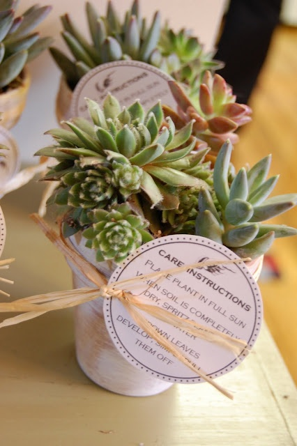 succulent favors with care instructions tag