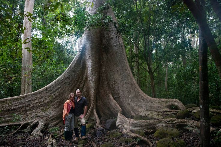 Der alte Baum im Cat Tien Nationalpark - #AsiaticaReisen