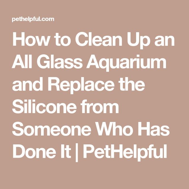 How to Clean Up an All Glass Aquarium and Replace the Silicone from Someone Who Has Done It   PetHelpful