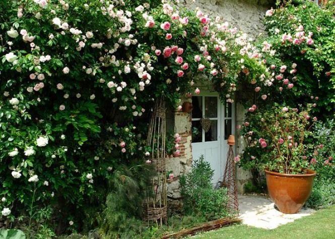 Remark planter un rosier sur une façade ensoleillée