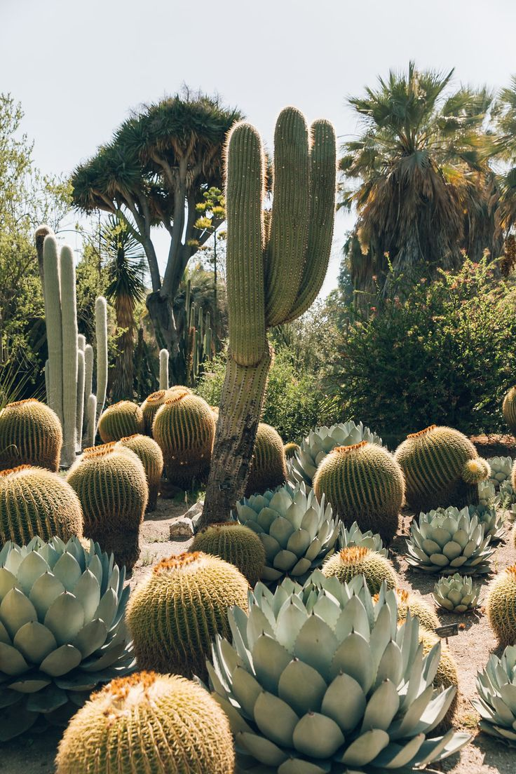 Desert Garden Near Los Angeles, California Plants