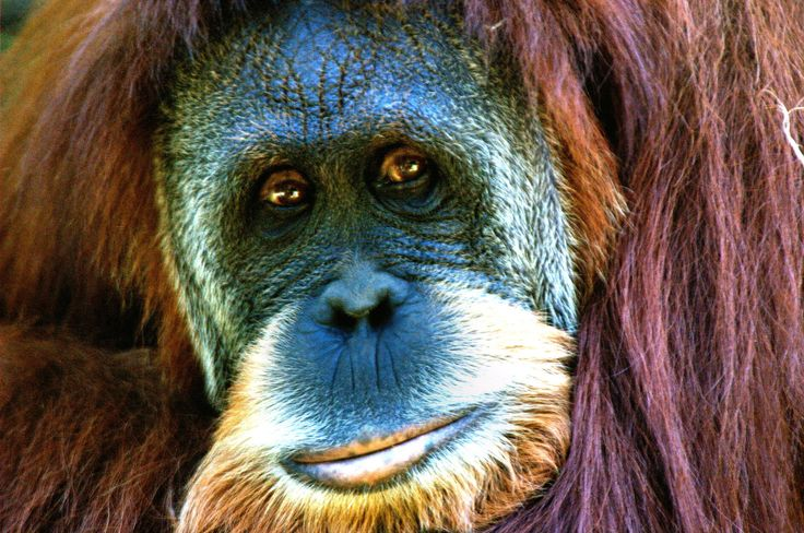 3 Ways YOU Are Driving the Sixth Extinction of Species   One Green Planet
