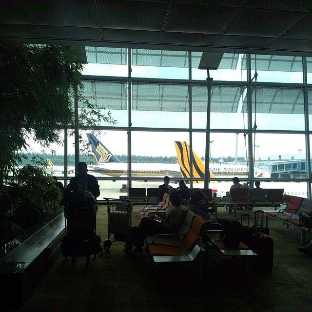 #changiairport #airport #singapore #tigerair #singaporeairlines #plane #airbus #a320