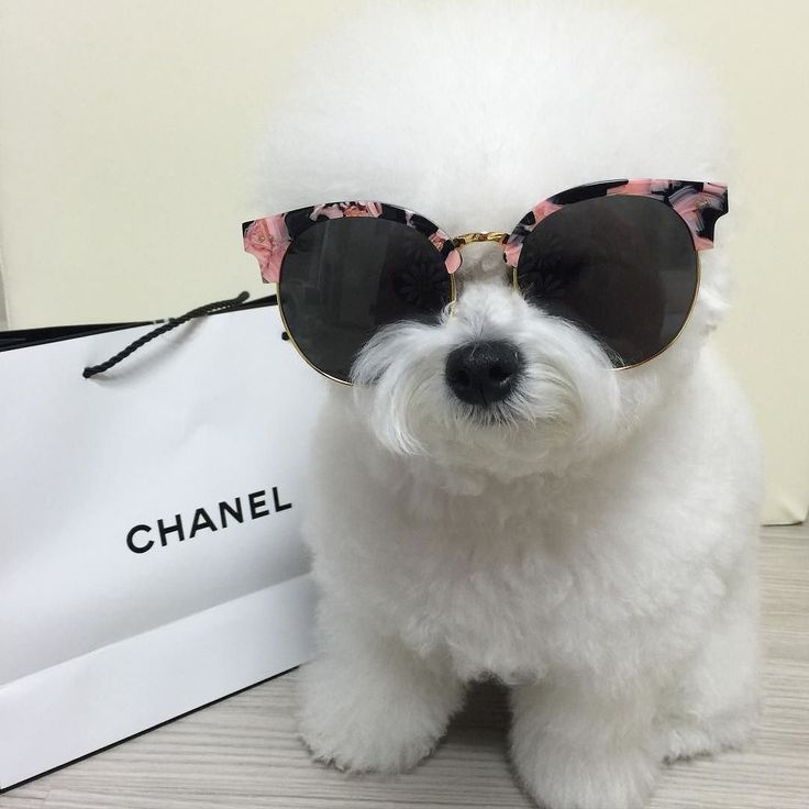 Cute floral sunglasses & Chanel for the chicest of dogs