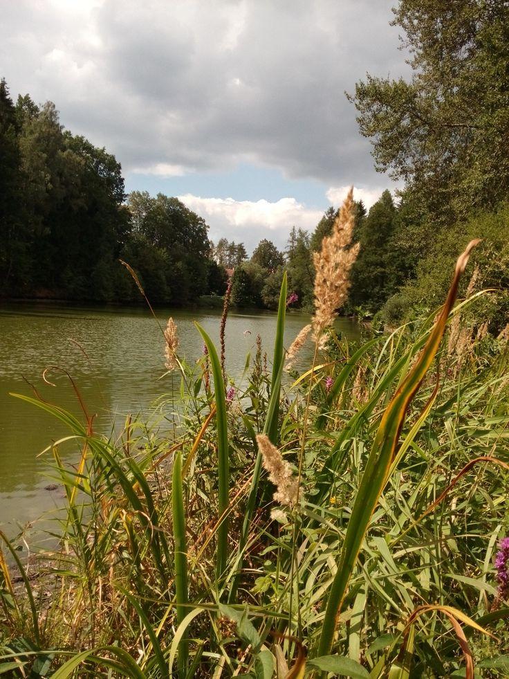 Srpnove dny u rybníka