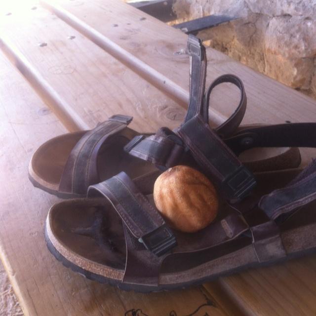 Comprati sandali professionali da trekking . Abbandono i miei sandaletti da 19,99 che mi hanno salvato i piedi tre giorni prima. Foto d'addio con Gualtiero ( il limone che viaggia con me)