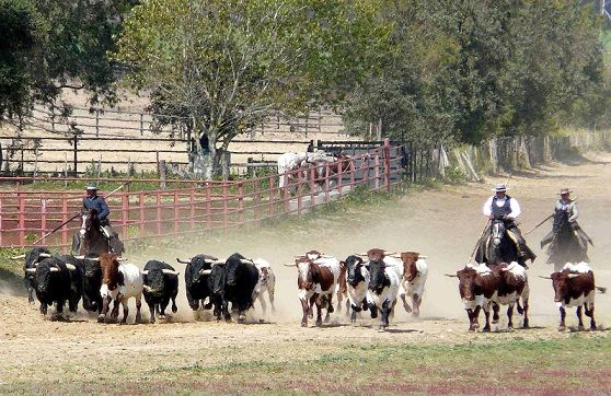 ganaderias de #toros #Spain #horses #caballos