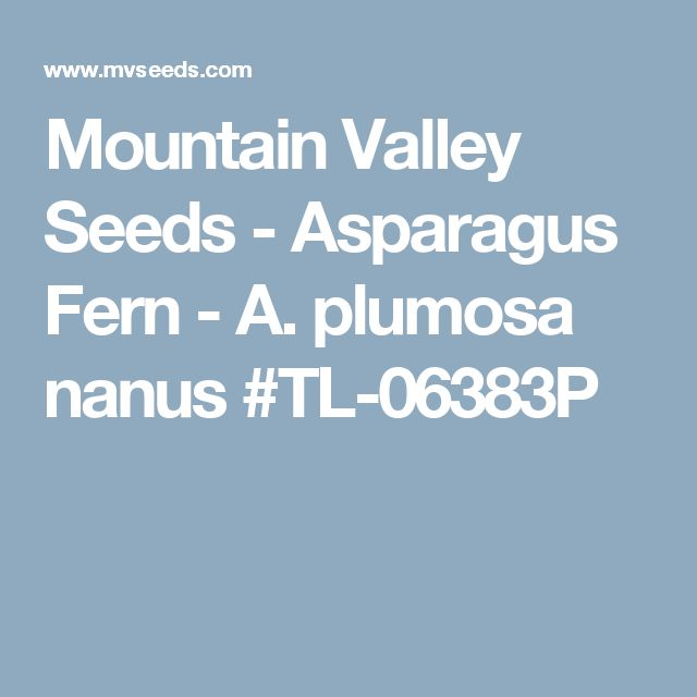 Mountain Valley Seeds - Asparagus Fern - A. plumosa nanus #TL-06383P