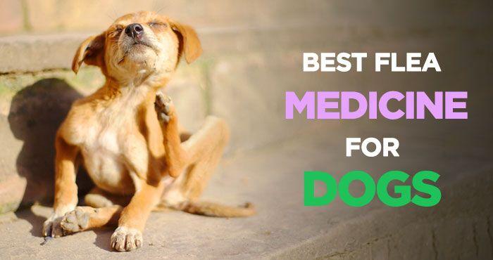 Best Flea Medicine for Dogs: Tick & Flea Control and Treatment http://peanutpaws.com/best-flea-medicine-for-dogs/  #dogs #ticks #flea #doghealth #medicine #doglovers #petcare #dog