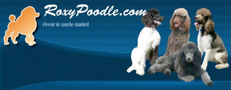 Roxy Poodle - Éleveur de caniche royal