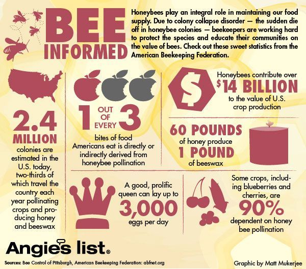 bees disappear with food supply Marla spivak: why are bees disappearing honeybees have thrived for 50 million years bees pollinate a third of our food supply.