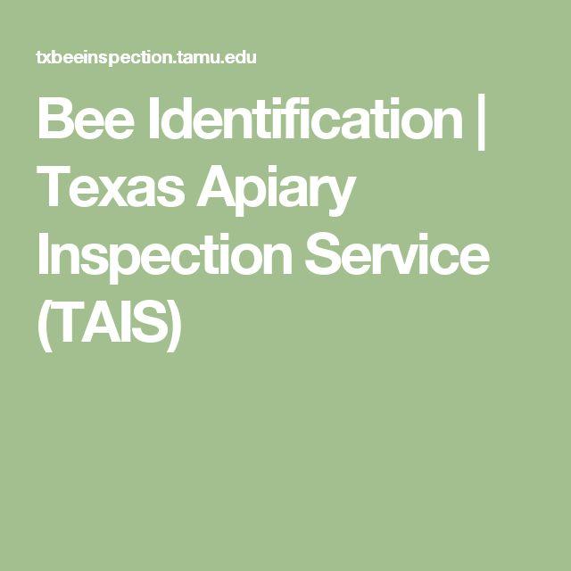 Bee Identification | Texas Apiary Inspection Service (TAIS)
