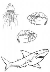 Farvelæg dyr i vand - Printland