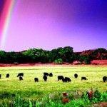 Efectele consumului de carne asupra mediului înconjurător – statistici și soluții