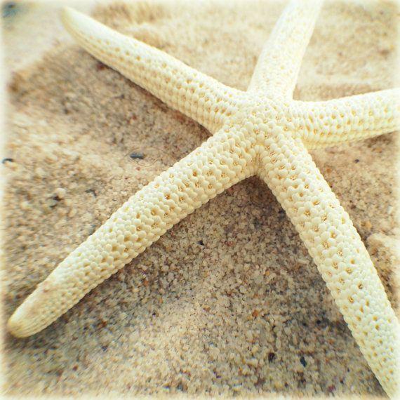 Starfish Beach Photography White Shabby Coastal by BeachBumChix,