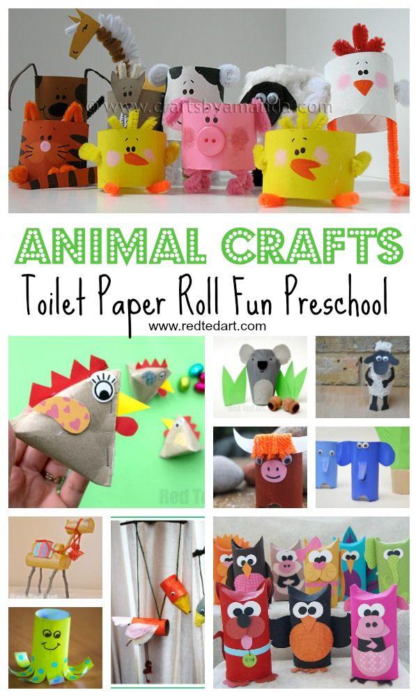 Toilet Paper Roll Animal Crafts For Preschool Kids