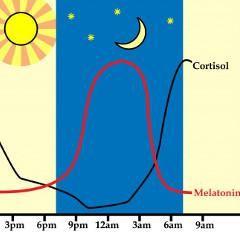 La mélatonine (hormone du sommeil) pourrait renforcer les os | Psychomédia