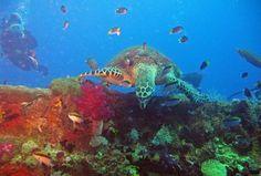 Yongala Wreck dive - off the QLD coast, Australia