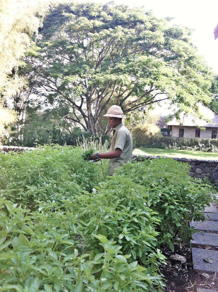 Organic garden at Alila Ubud - Bali
