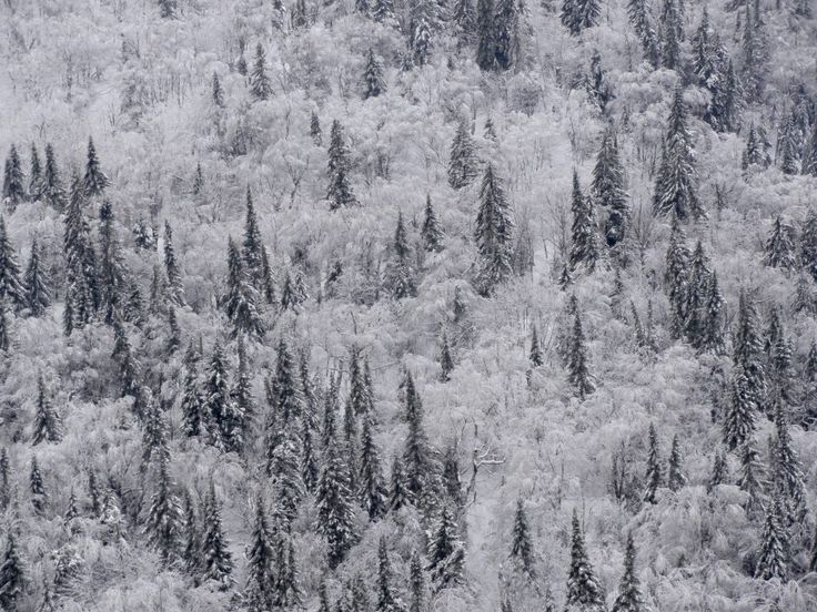 Mont-Tremblant National Park in winter