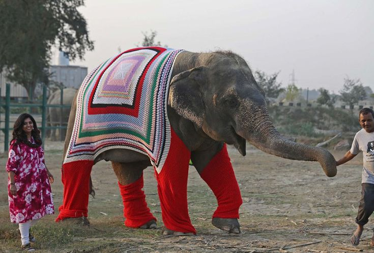 People Are Knitting Giant Sweaters For Rescued Elephants To Protect Them From Cold