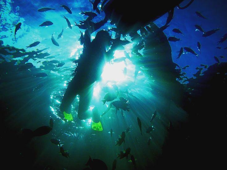 11月ですが こんにちはSeanaSurfです 11月になりました 沖縄は段々と肌寒くなってきております ですが海は年中無休で入れますよ SurfingSUP そしてシュノーケリング あの青の洞窟に行ってみませんか Please come to Seanasurf #seanasurf #okinawa # #november #sea #sun #surf #surfing #sup #snorkelling #come  #fun #沖縄 #シーナサーフ #青の洞窟 #真栄田岬 #11月 #海 #泳ぐ #青 #サーフィン #体験 #楽しい #綺麗 #恩納村