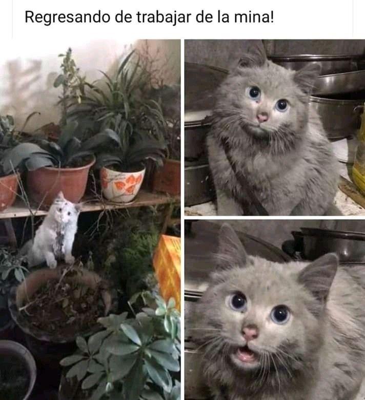 Pin De Lisbeth En Memes En 2020 Memes De Animales Divertidos Memes Divertidos Memes Comicos