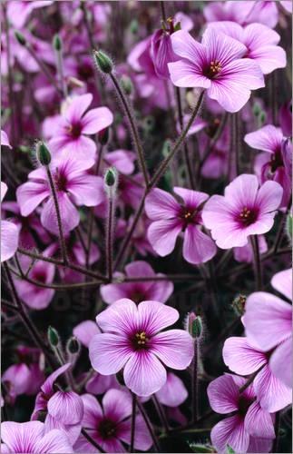 ~~Flowers in Bergianska Tradgarden by Jonathan Smith~~