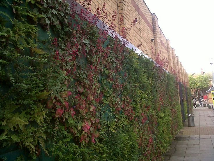 A Green Wall portraying the living lab concept.