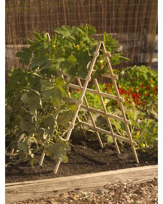 Cucumber trellis then lettuce and spinach in the centre.... This is what I really wanted/ going for