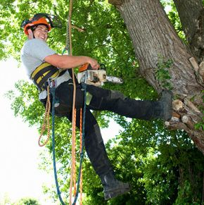 Our team is highly skilled no matter how big or tall your trees are. Our tree loppers and arborists has been doing tree removal in Capalaba with care.  https://www.facebook.com/capalabatreeremoval/