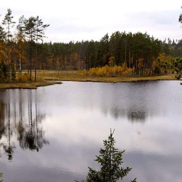 #finnskogen #mystisk #magisk #skog #vann #fiske #jakte #hunting #fishing #tjern #dnt #yrbilder #2vær #utnorge #ulbolig #follow4follow #hof #åsnes #visitnorway