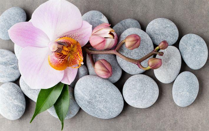 Hämta bilder Rosa orkidéer, spa, stenar, orkidéer, tropiska blommor, spa-koncept