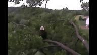 Decorah, Iowa live eagle cam.