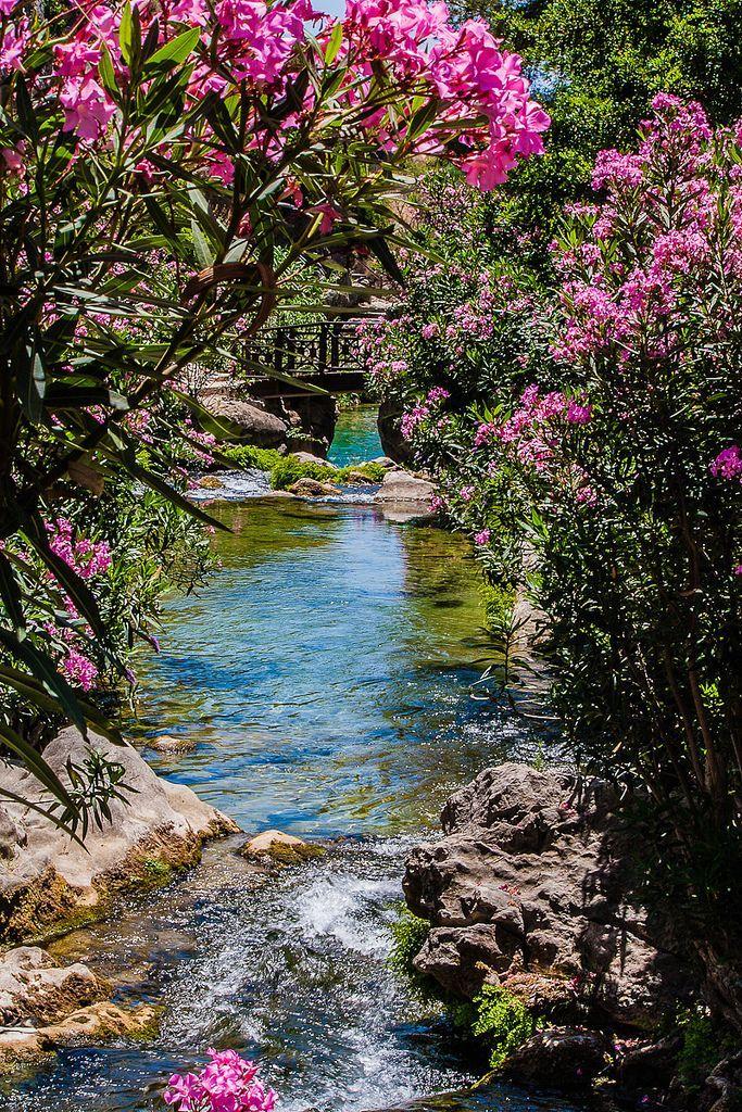 Secret Garden: 431 Best Dreaming Of Eden Images On Pinterest