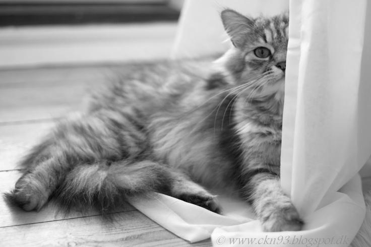 Beautiful cat, Gucci