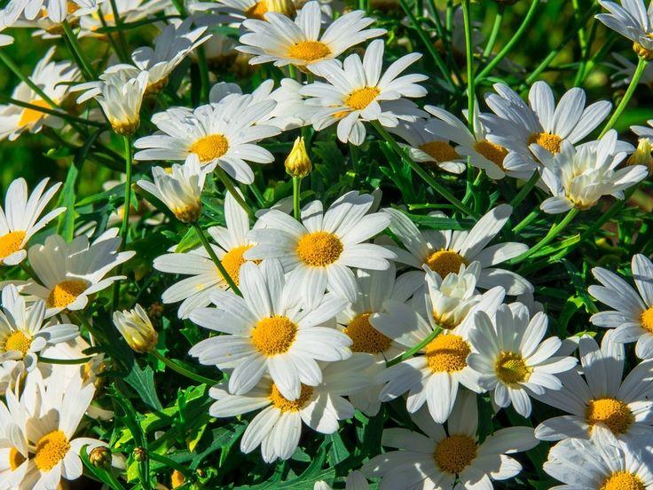 http://www.artleo.com/pic/201309/1024x768/artleo.com-54995.jpg