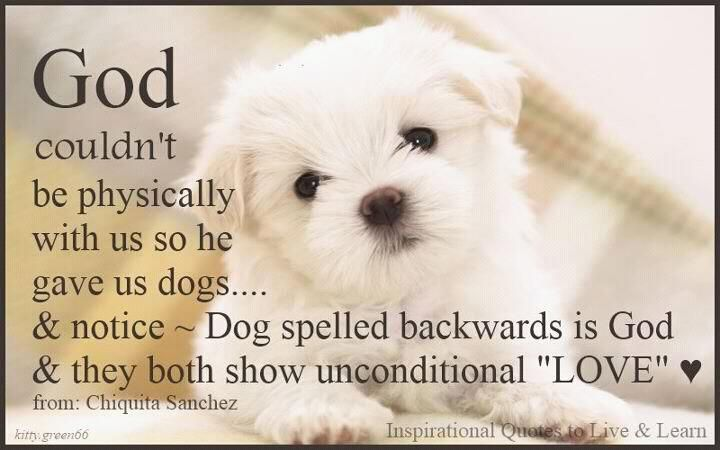 God couldn't be physically with us so he gave us dogs ~ Dog spelled backwards is God & both show unconditional love!