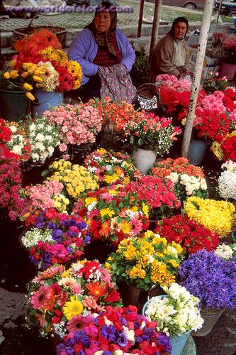 Why is this on my bucket list?? Because I have always wanted to buy flowers from a road side vendor. I think the idea is absolutely romantic!