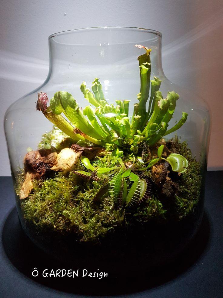 les 25 meilleures id es de la cat gorie plante carnivore sur pinterest plantes carnivores des. Black Bedroom Furniture Sets. Home Design Ideas
