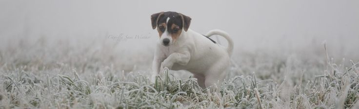 Winter is yet to come – CSW dogs