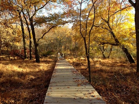 Cheesequake State Park. Short, easy hike through beautiful marshlands and pine barrens with the assistance of numerous boardwalks.