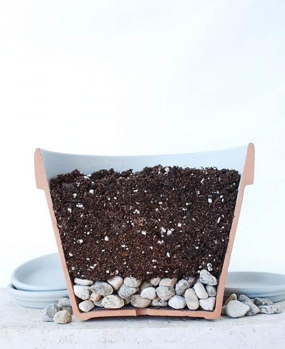 Тропическая красавица строманта: Правила ухода в домашних условиях 40+ фото http://happymodern.ru/stromanta-foto/ Чтобы корни не загнивали, растению необходим дренаж Смотри больше http://happymodern.ru/stromanta-foto/