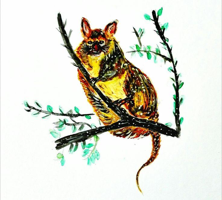 Australian Possums