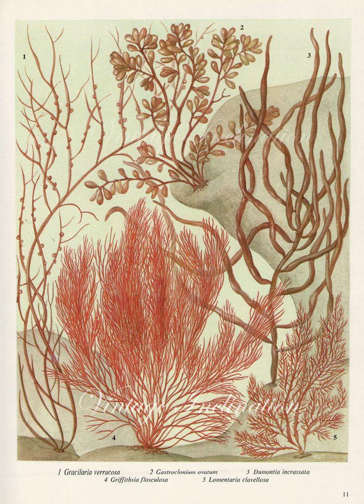 Print 111 – Victorian Antique Prints