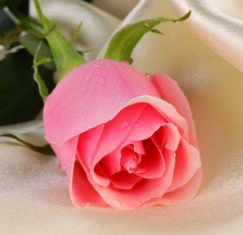 Resultado de imagen de postales de las flores mas bellas