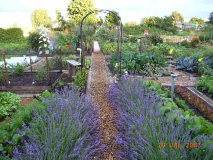 Plant Lavender To Keep The Deer Away Garden And Yard