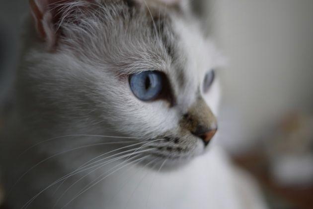 福島・三春シェルターからやってきた「小春ちゃん」ー被災動物の里親になるということ