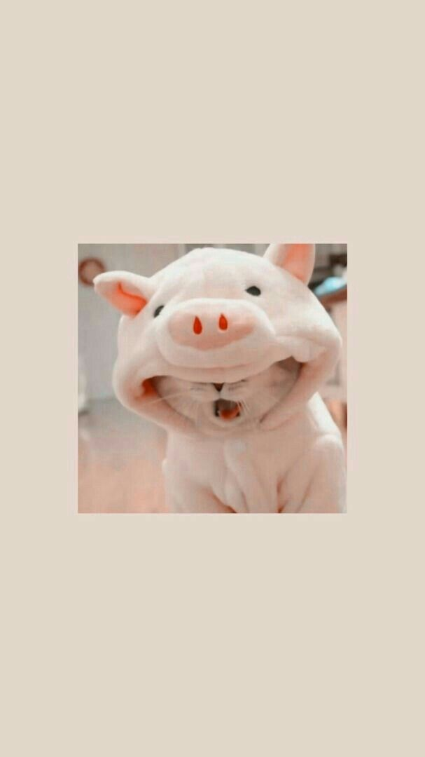 Pin De Kattie En Fondos En 2020 Fondos De Gato Empapelado De Gato Fondos De Pantalla Animales