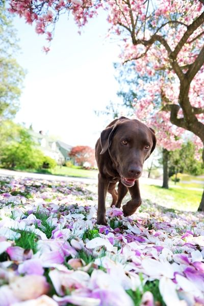 How to Take Meaningful Photos of Your Dog by @Jennifer Tonetti-Spellman for iHeartfaces.com